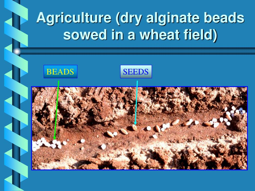 Agriculture (dry alginate beads sowed in a wheat field)
