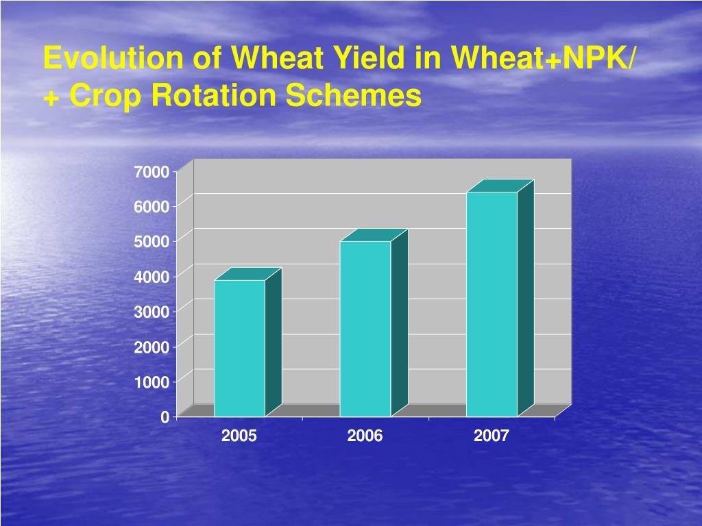 Evolution of Wheat Yield in Wheat+NPK/  + Crop Rotation Schemes