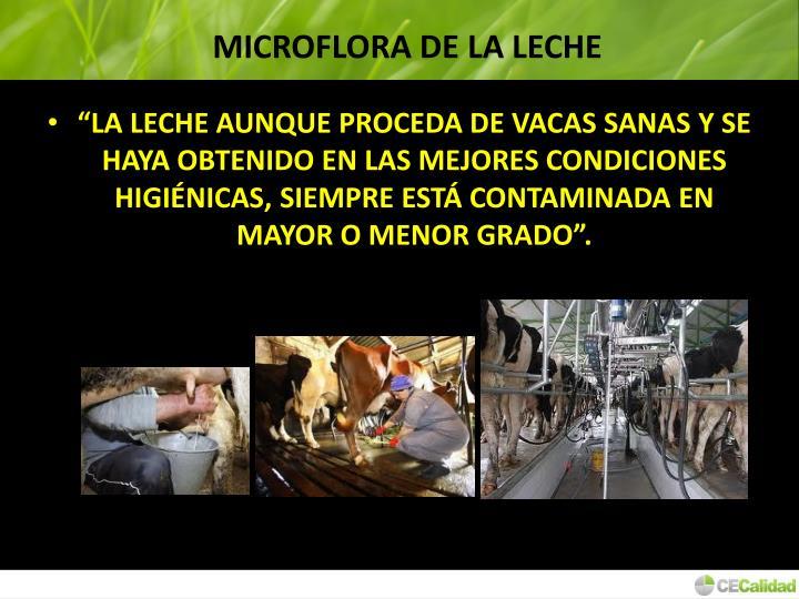 MICROFLORA DE LA LECHE