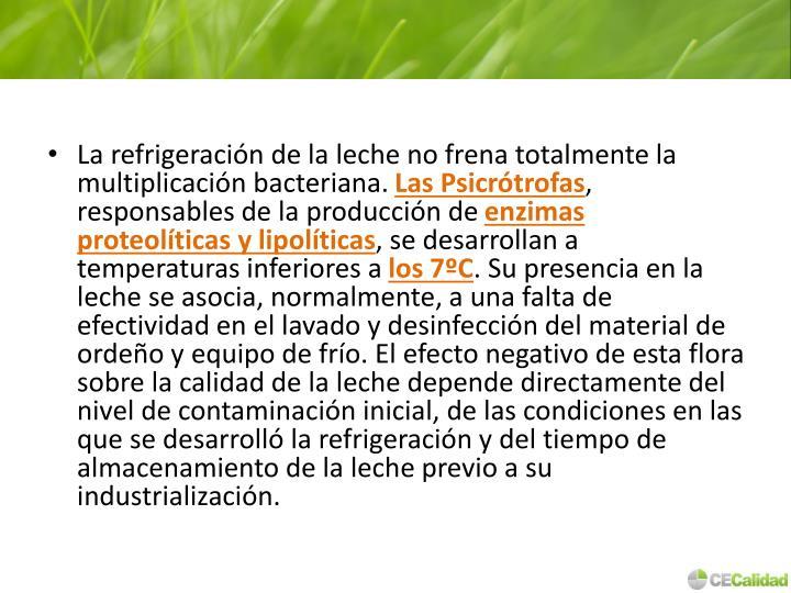 La refrigeración de la leche no frena totalmente la multiplicación bacteriana.