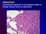 adenoma continued exposure to carcinogens leads to benign tumors such as adenomas