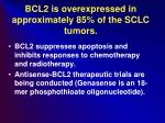 bcl2 is overexpressed in approximately 85 of the sclc tumors