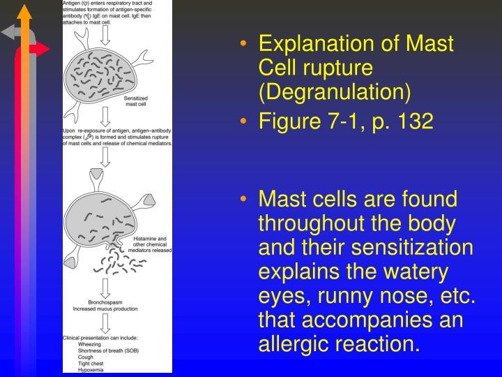 Explanation of Mast Cell rupture (Degranulation)