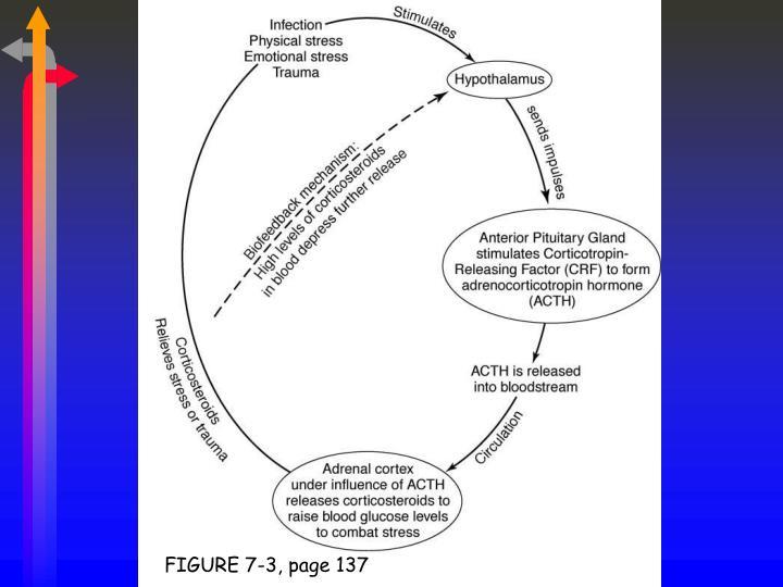 FIGURE 7-3, page 137