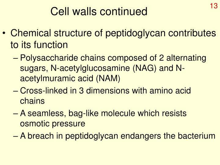 Cell walls continued