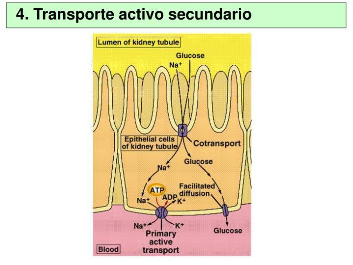 4. Transporte activo secundario