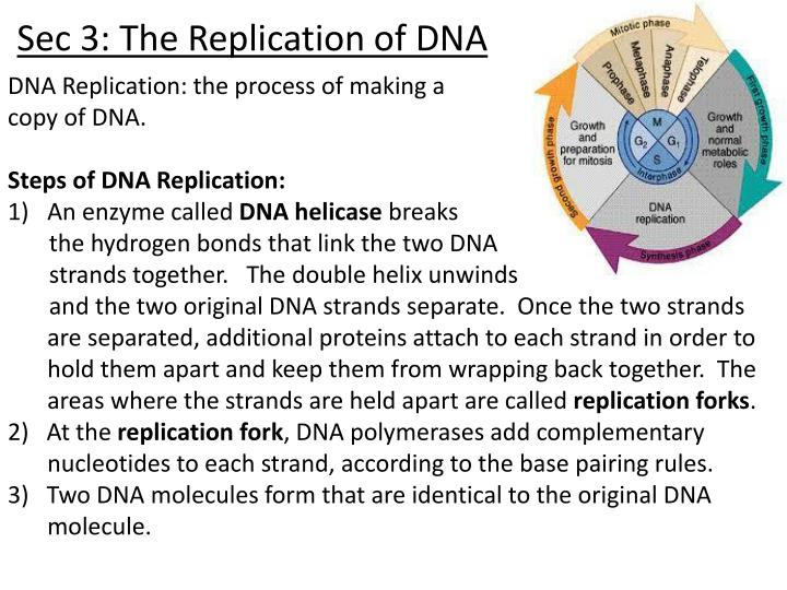 Sec 3: The Replication of DNA