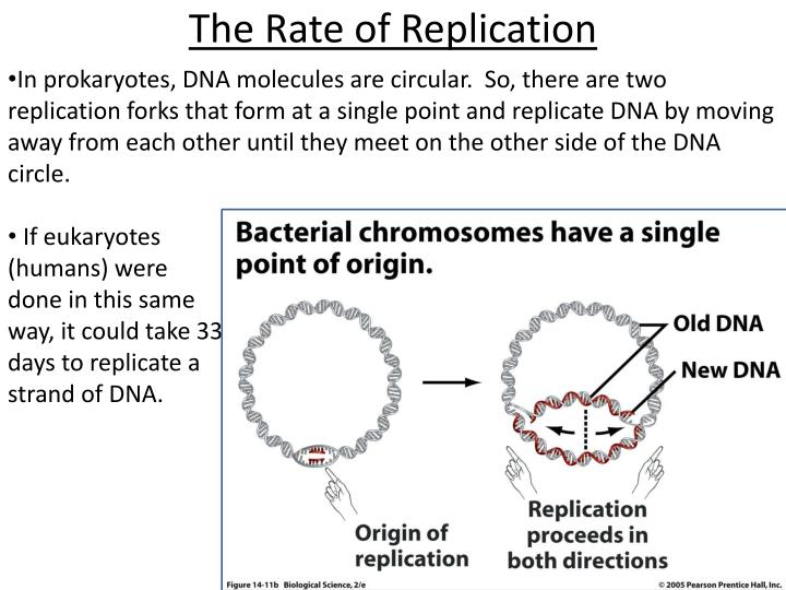 The Rate of Replication