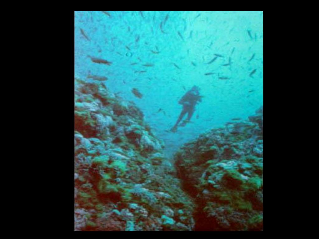 11. Divers on Bank