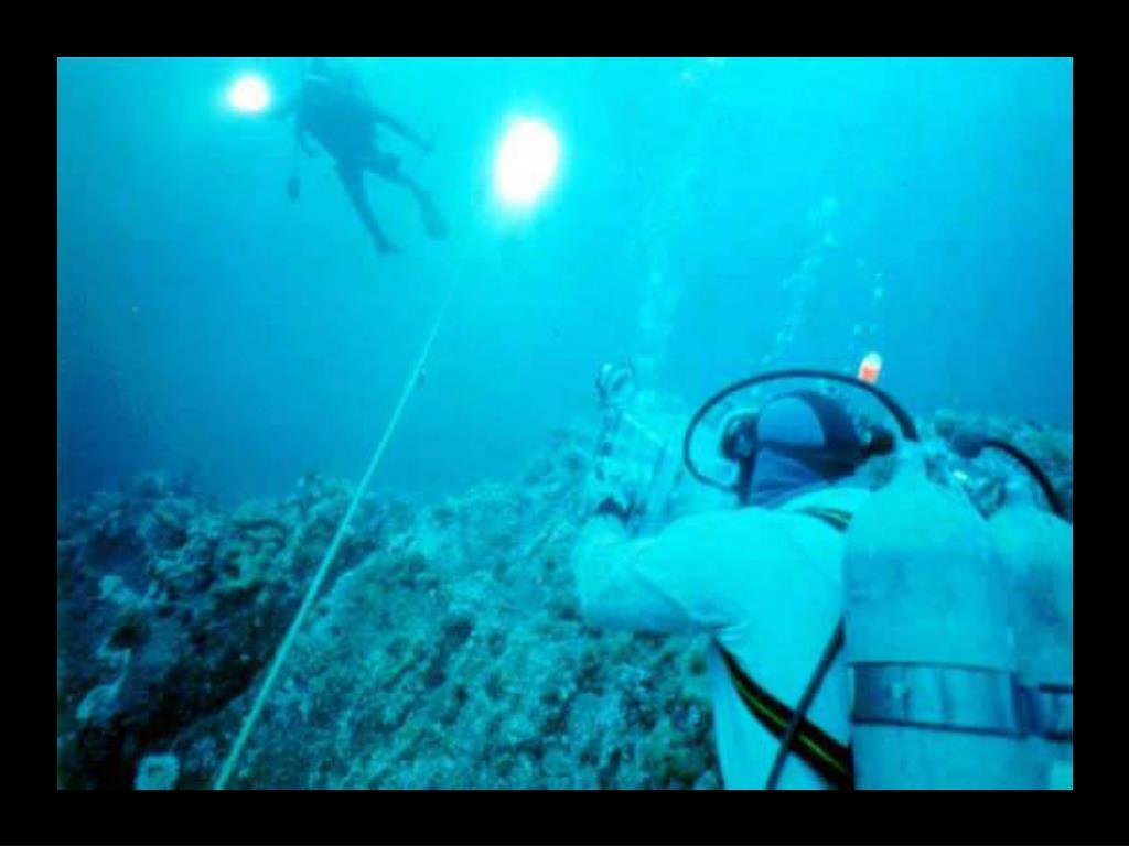 13. Diver