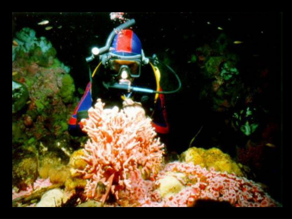 14. Diver and hydrocoral