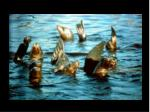 48 california sea lions