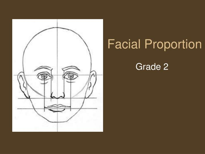 facial proportion n.