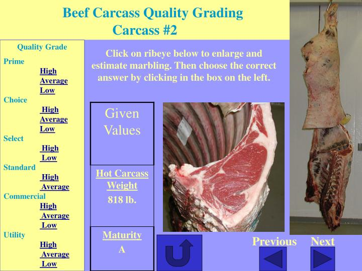 Beef Carcass Quality Grading