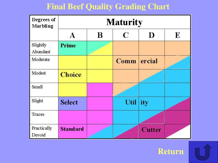 Final Beef Quality Grading Chart