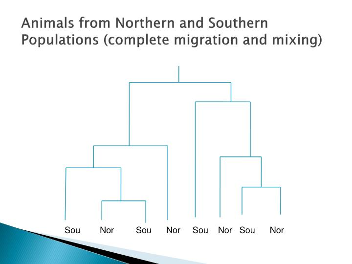 Animals from Northern and Southern Populations (complete migration and mixing)