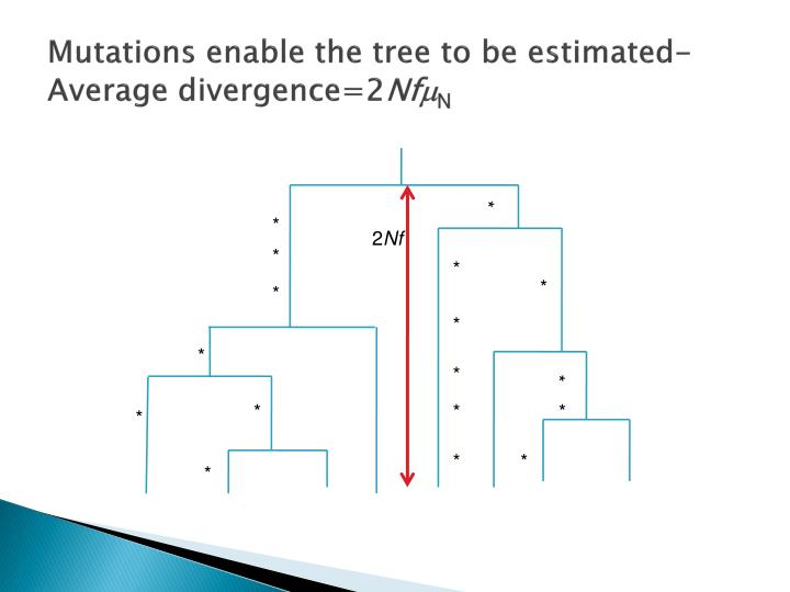 Mutations enable the tree to be estimated-Average divergence=2