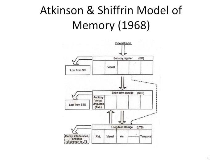 atkinson shiffrin memory model