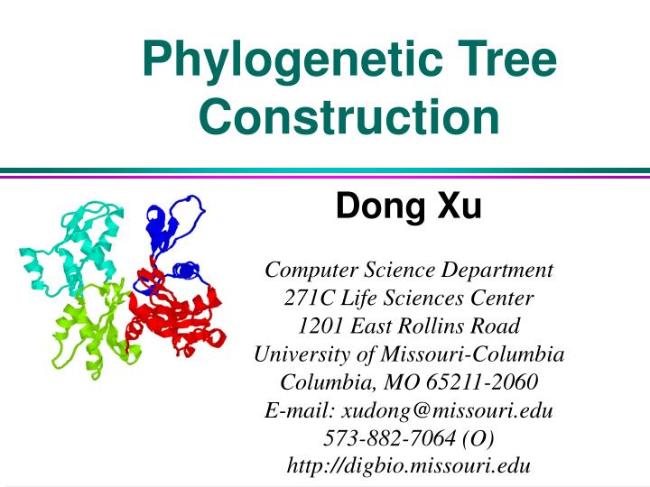 phylogenetic tree construction n.
