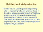 hatchery and wild production