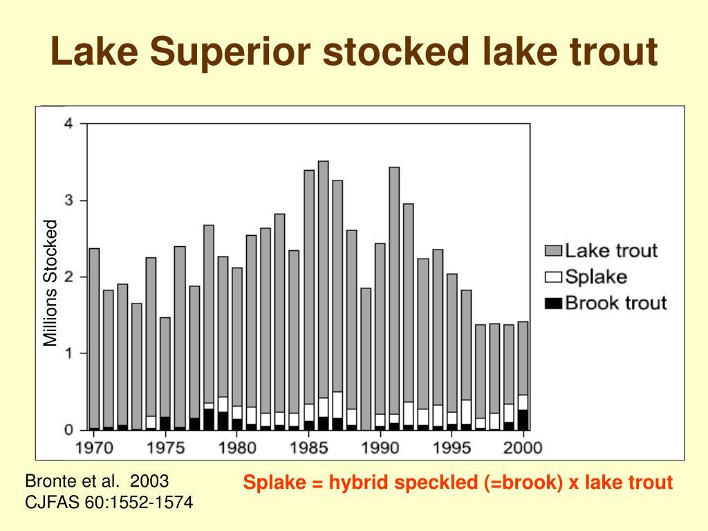 Lake Superior stocked lake trout