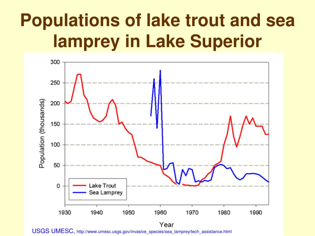 Populations of lake trout and sea lamprey in Lake Superior