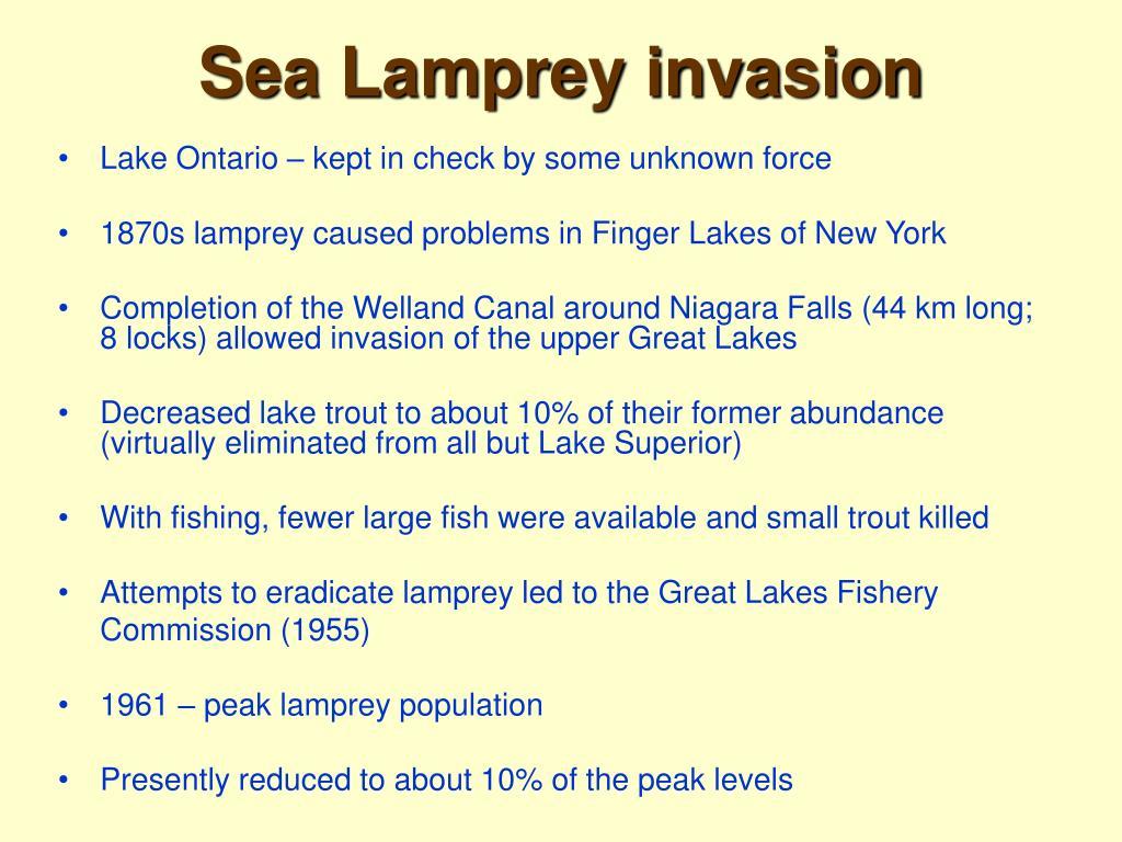 Sea Lamprey invasion