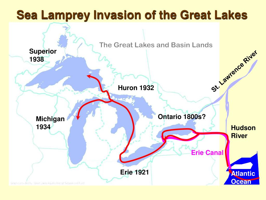 Sea Lamprey Invasion of the Great Lakes