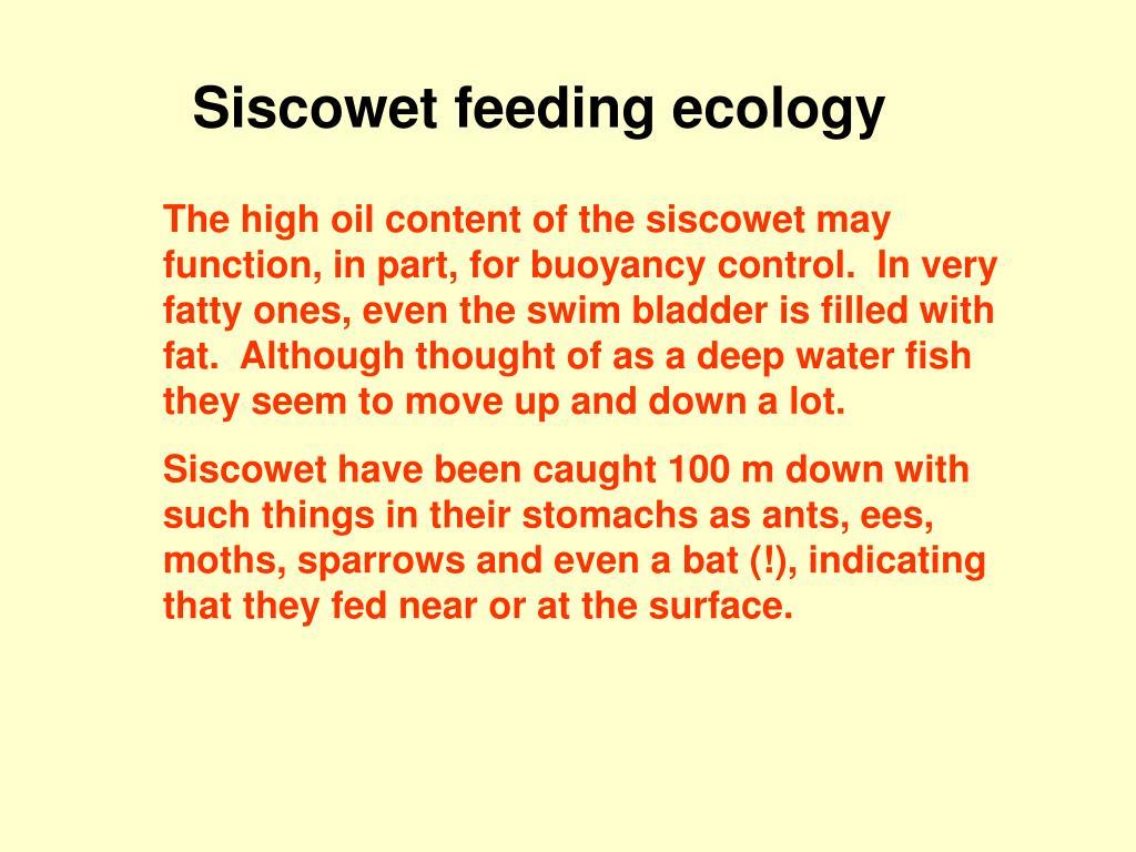 Siscowet feeding ecology