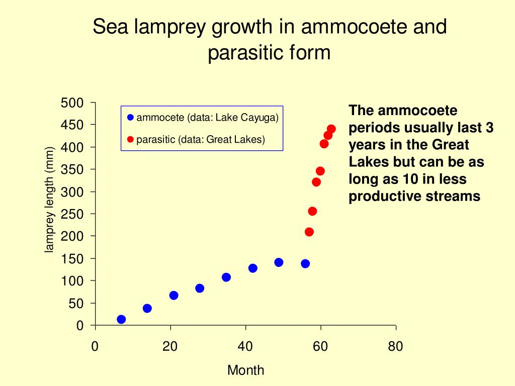 The ammocoete periods usually last 3 years in the Great Lakes but can be as long as 10 in less productive streams