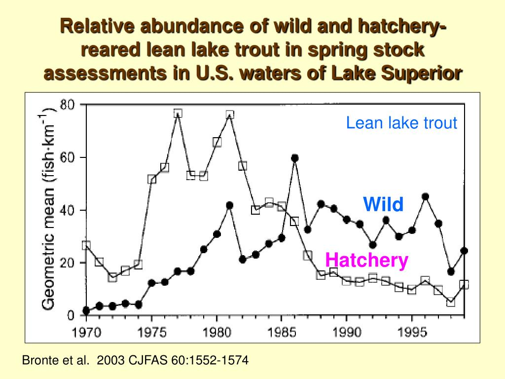 Relative abundance of wild and hatchery-reared lean lake trout in spring stock assessments in U.S. waters of Lake Superior