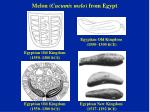 melon cucumis melo from egypt