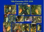 villa farnesina 1515 1518 cucumis sativus