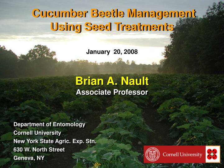 cucumber beetle management using seed treatments n.