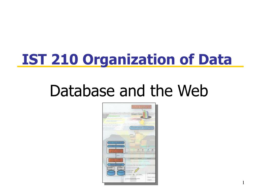 ist 210 organization of data l.