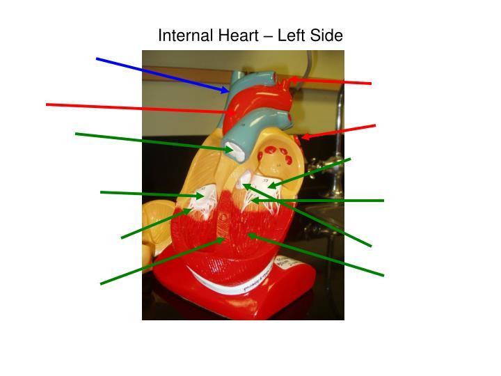 Internal Heart – Left Side