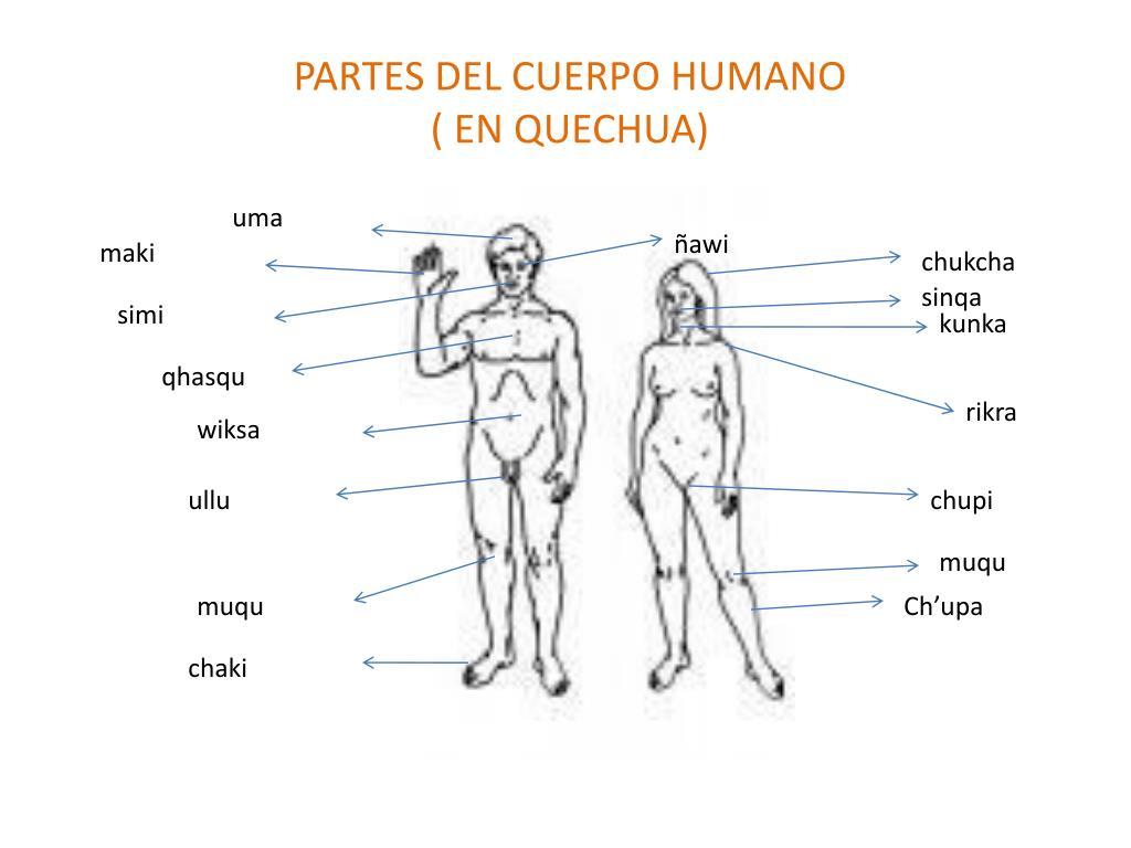 PPT - PARTES DEL CUERPO HUMANO ( EN QUECHUA) PowerPoint Presentation ...
