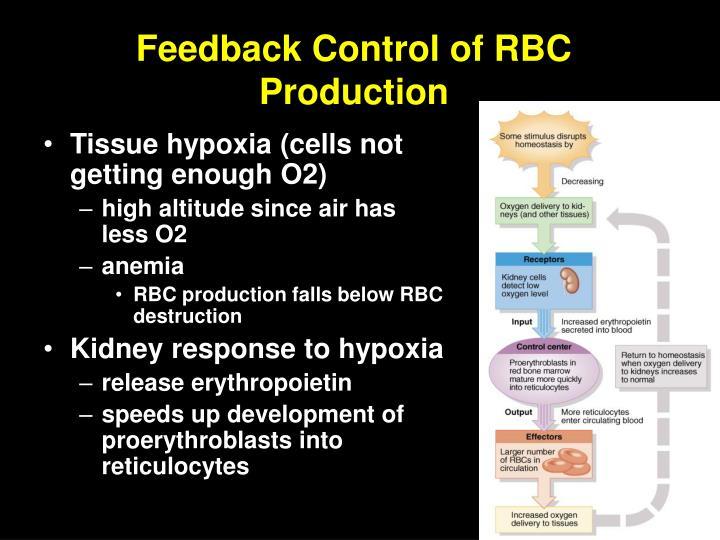 Feedback Control of RBC Production