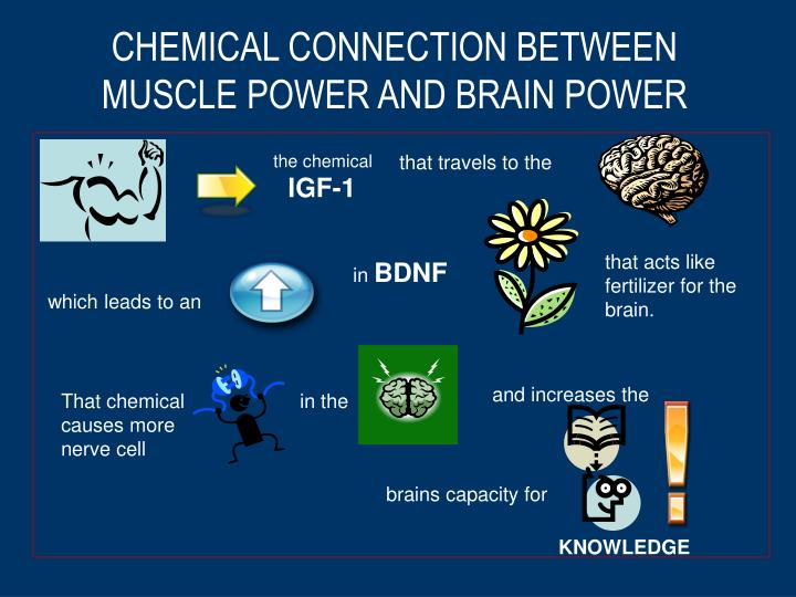 CHEMICAL CONNECTION BETWEEN MUSCLE POWER AND BRAIN POWER