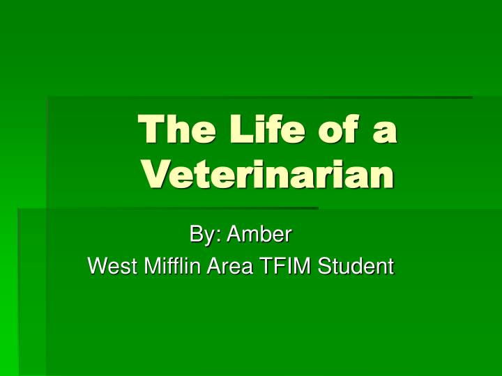 the life of a veterinarian n.