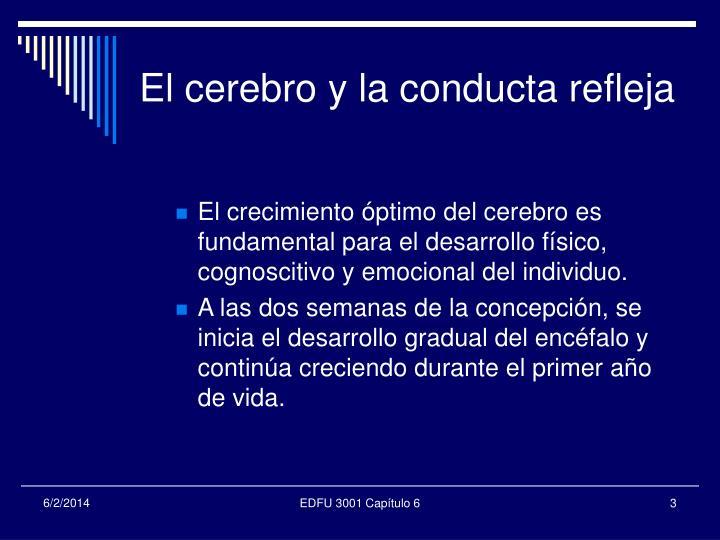 El cerebro y la conducta refleja1