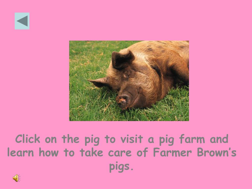 Click on the pig to visit a pig farm and learn how to take care of Farmer Brown's pigs.