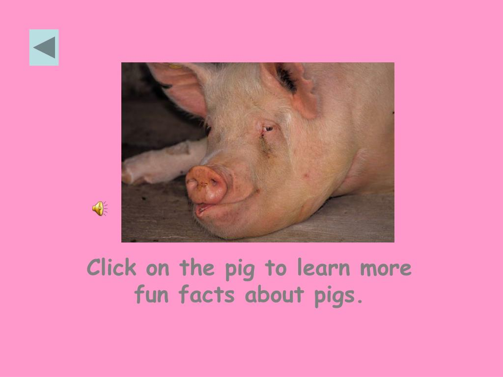 Click on the pig to learn more fun facts about pigs.