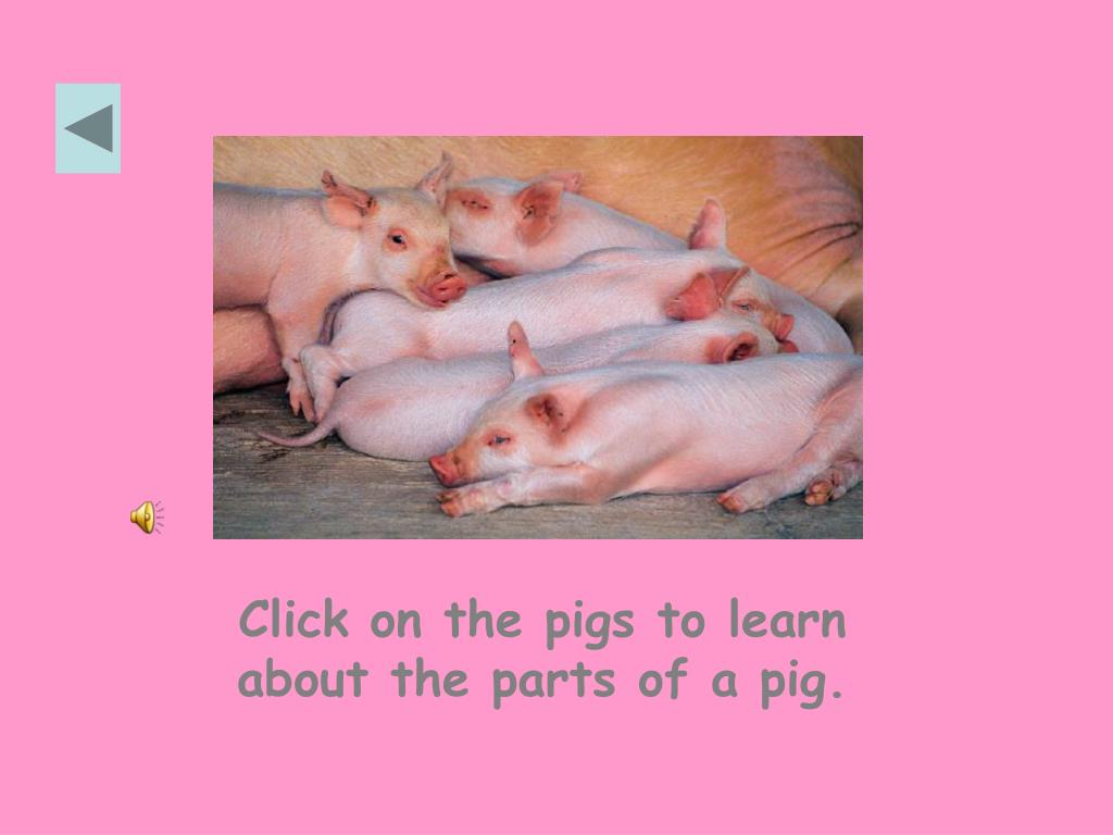 Click on the pigs to learn about the parts of a pig.
