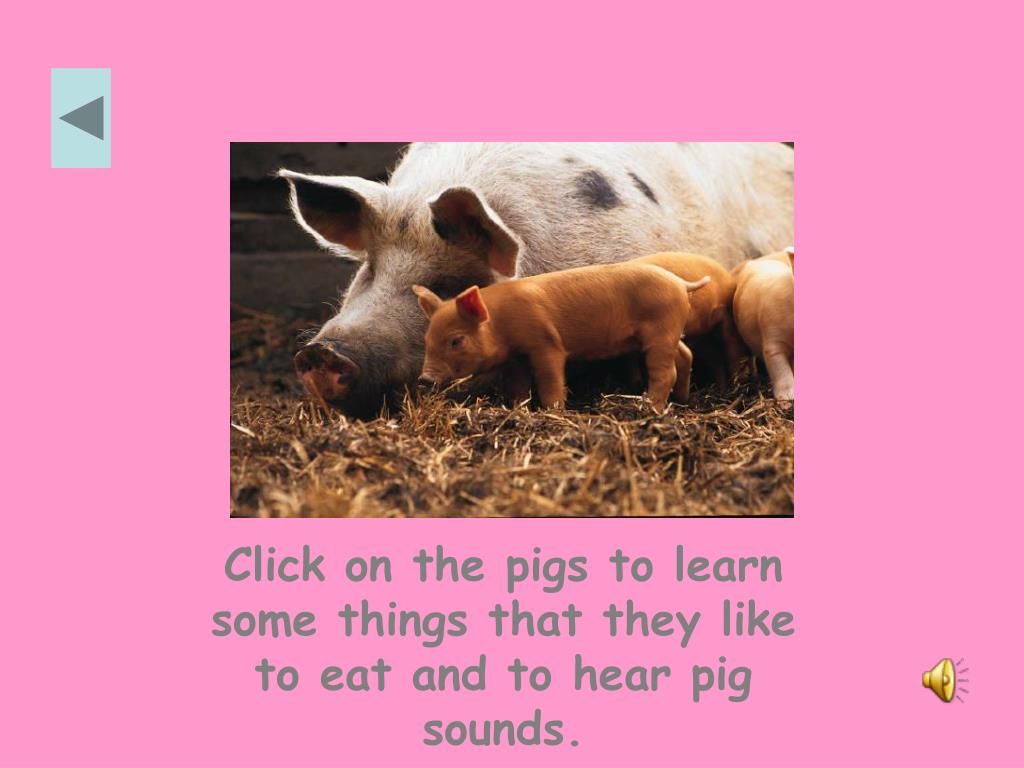 Click on the pigs to learn some things that they like to eat and to hear pig sounds.