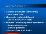 anatomy summary