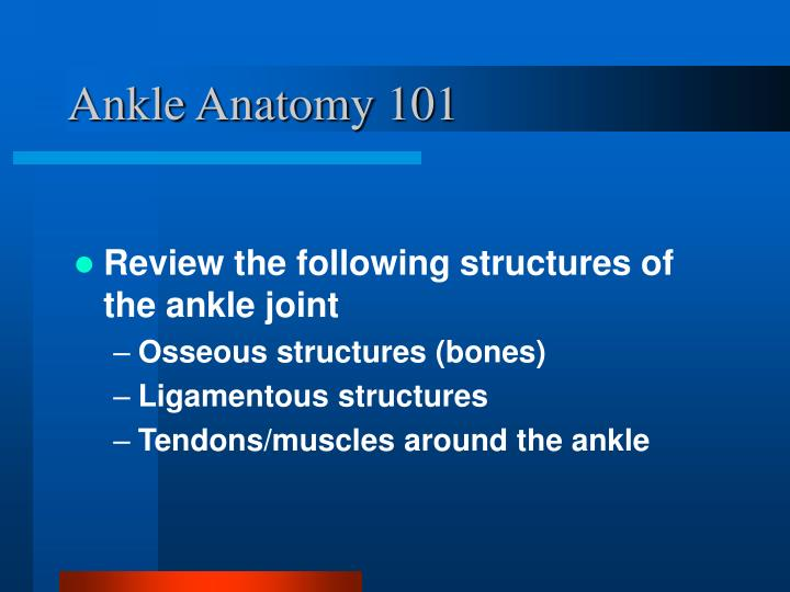 Ankle Anatomy 101