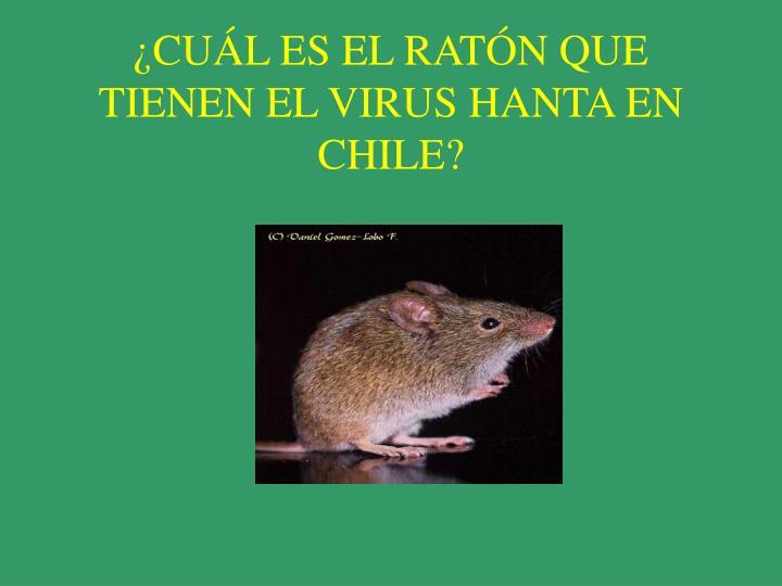 ¿CUÁL ES EL RATÓN QUE TIENEN EL VIRUS HANTA EN CHILE?