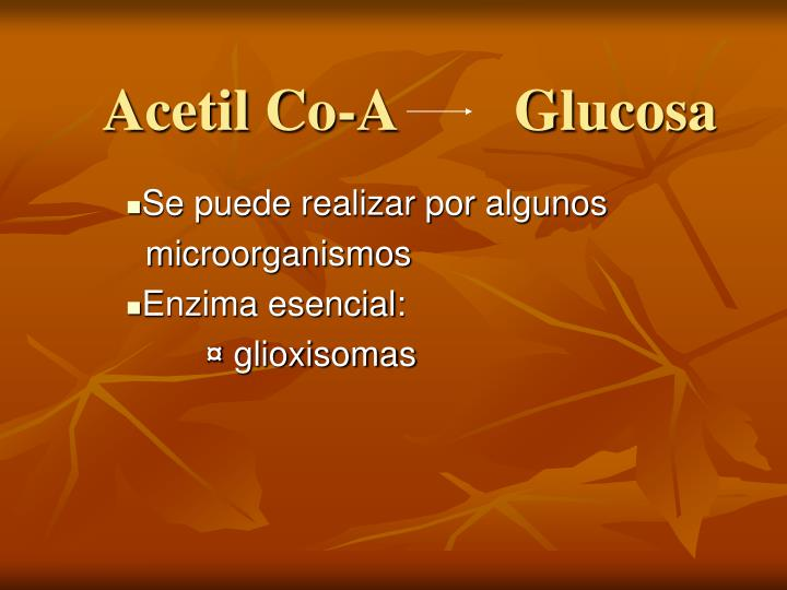 Acetil Co-A        Glucosa