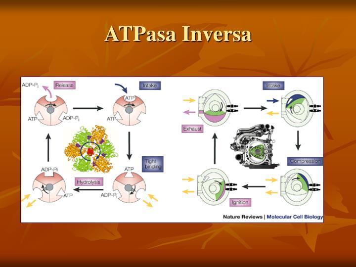 ATPasa Inversa